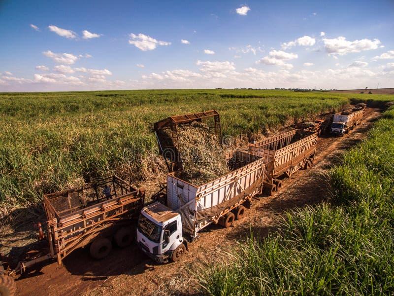 Campo della piantagione più hasvest della canna da zucchero fotografia stock libera da diritti