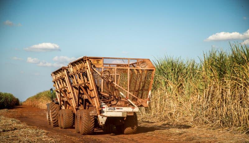 Campo della piantagione più hasvest della canna da zucchero fotografia stock