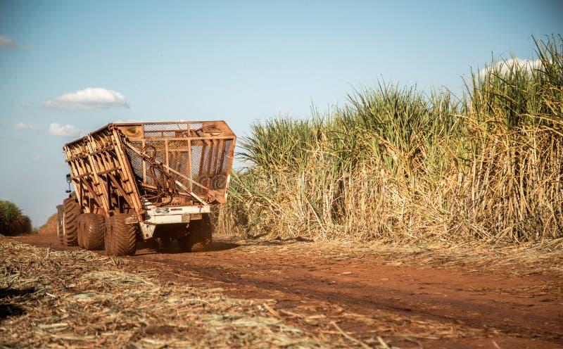 Campo della piantagione più hasvest della canna da zucchero fotografie stock libere da diritti