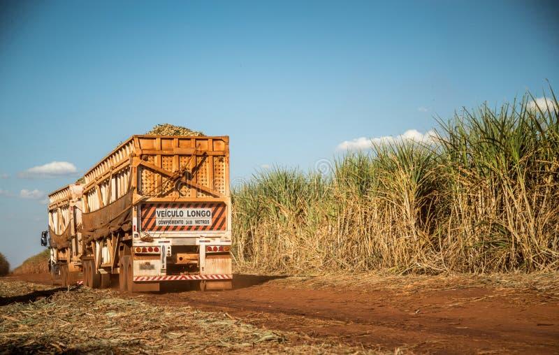 Campo della piantagione più hasvest della canna da zucchero fotografie stock