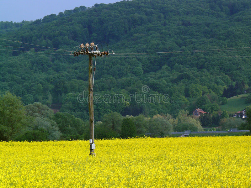 Campo delle piante per bio- combustibile   immagini stock libere da diritti