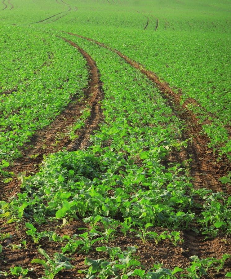 Campo di agricoltura immagine stock