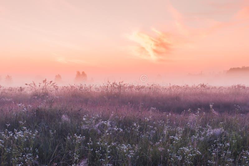 Campo di alba dei fiori rosa di fioritura del prato immagini stock libere da diritti