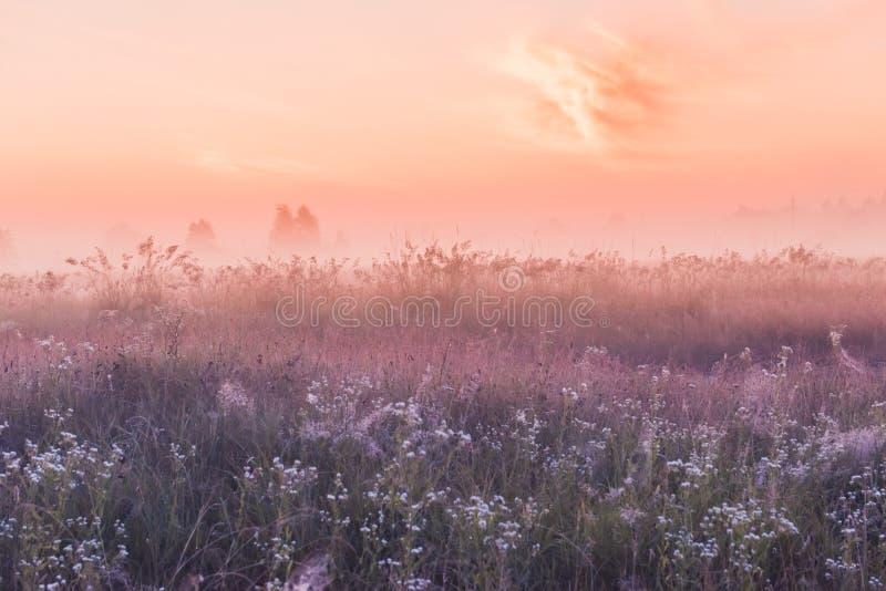 Campo di alba dei fiori rosa di fioritura del prato immagine stock libera da diritti