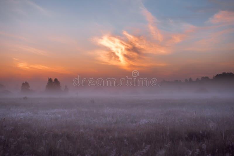 Campo di alba dei fiori rosa di fioritura del prato fotografia stock