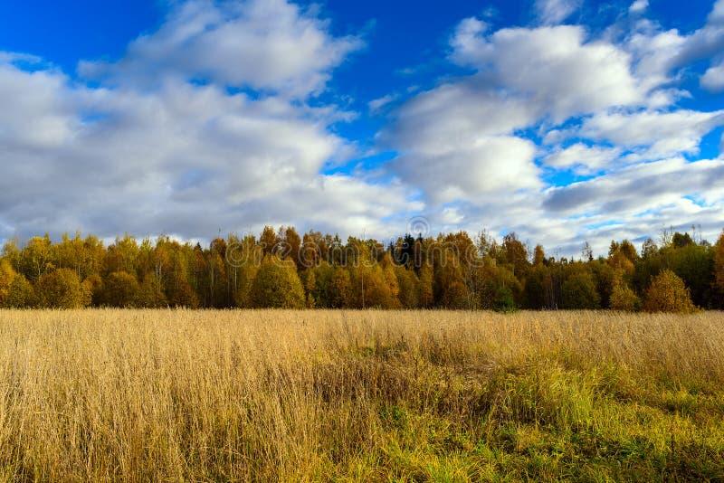 Campo di autunno con la foresta del cielo blu a fondo fotografie stock libere da diritti