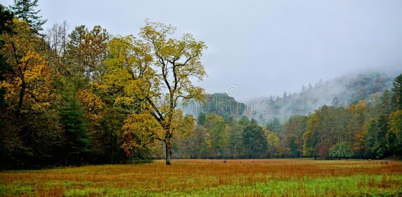 Campo di autunno in montagne immagini stock