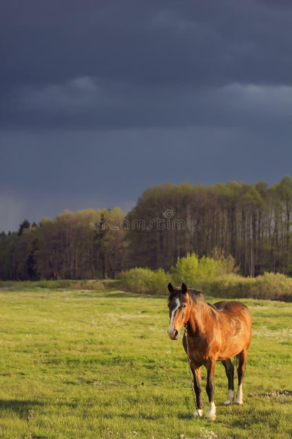 Campo di cavalli prima di un temporale fotografie stock libere da diritti