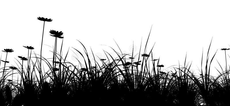 Campo di erba con la camomilla illustrazione di stock