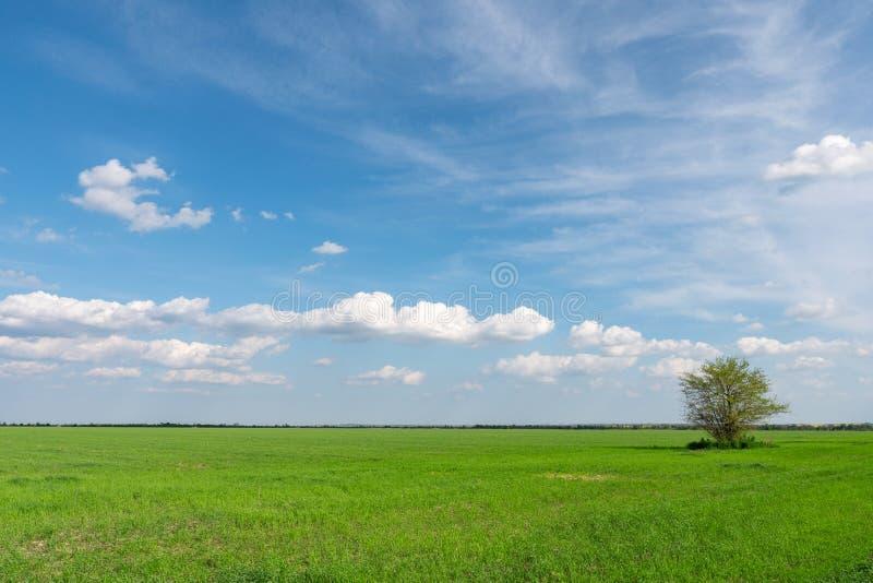 Campo di erba fresca verde sotto il cielo nuvoloso blu immagini stock libere da diritti