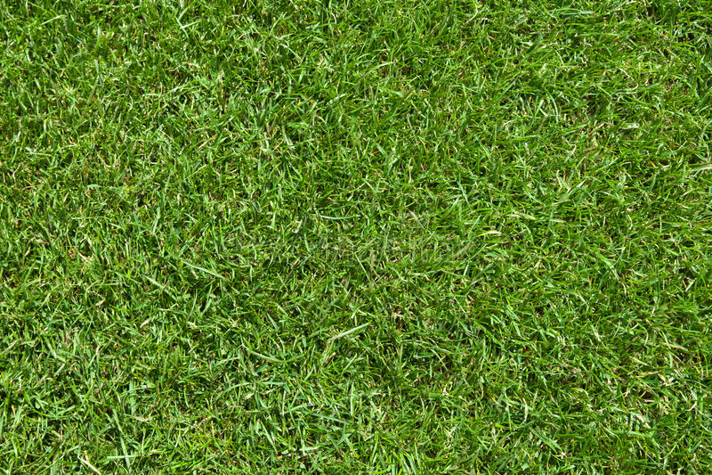 Campo di erba naturale fresco del prato inglese fotografia for Tappeto erboso a rotoli prezzi