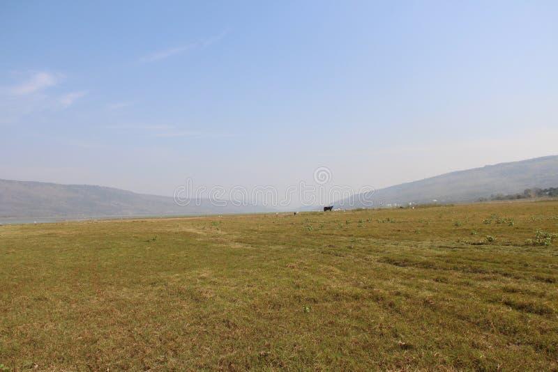 Campo di erba sul cielo bianco blu fotografie stock libere da diritti