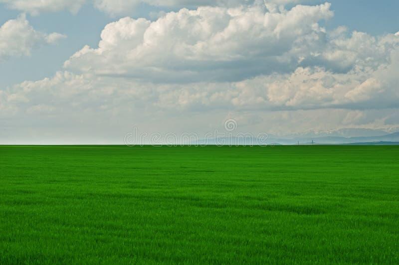 Campo di erba verde con cielo blu nuvoloso immagini stock libere da diritti