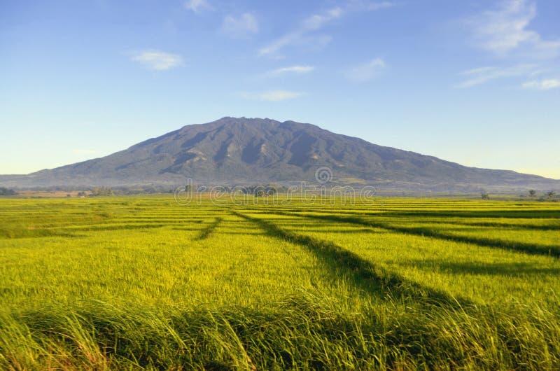 Campo di erba verde con una grande montagna ai precedenti - isola di Caramoan, Filippine fotografia stock libera da diritti