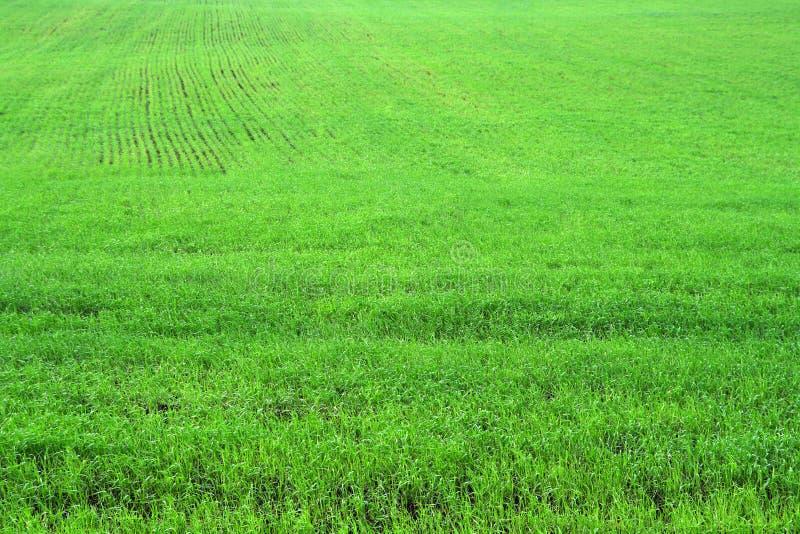 Campo di erba verde dell'erba immagini stock libere da diritti