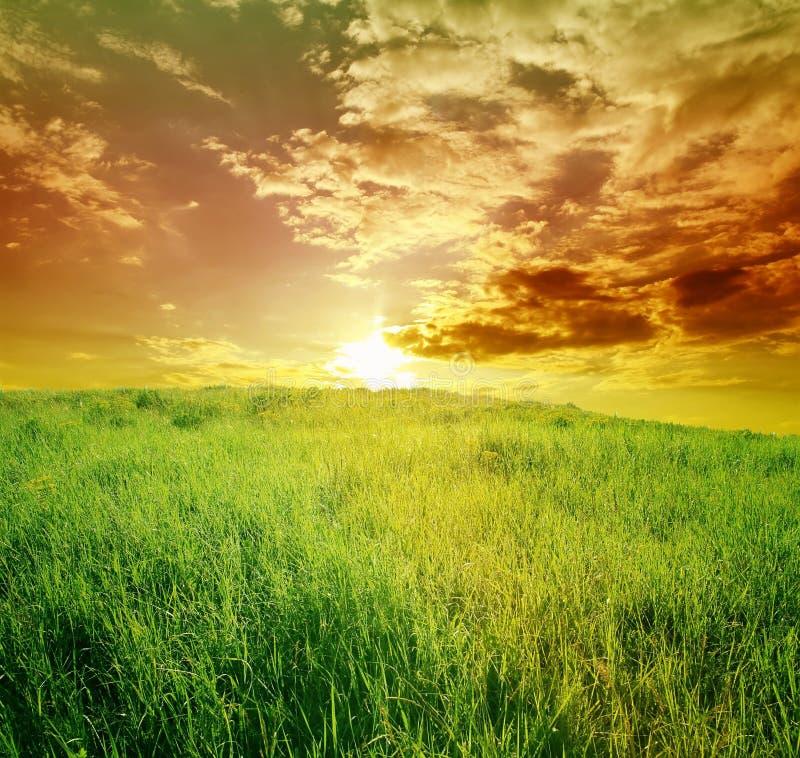 Campo di erba verde e del cielo nuvoloso blu immagine stock