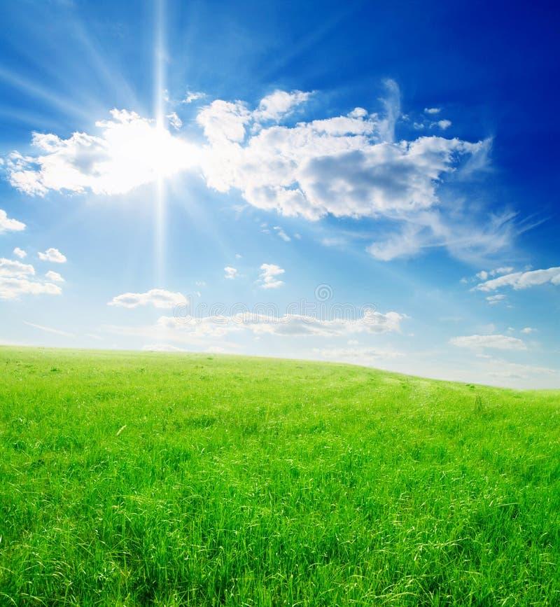 Campo di erba verde e del cielo nuvoloso blu immagine stock libera da diritti