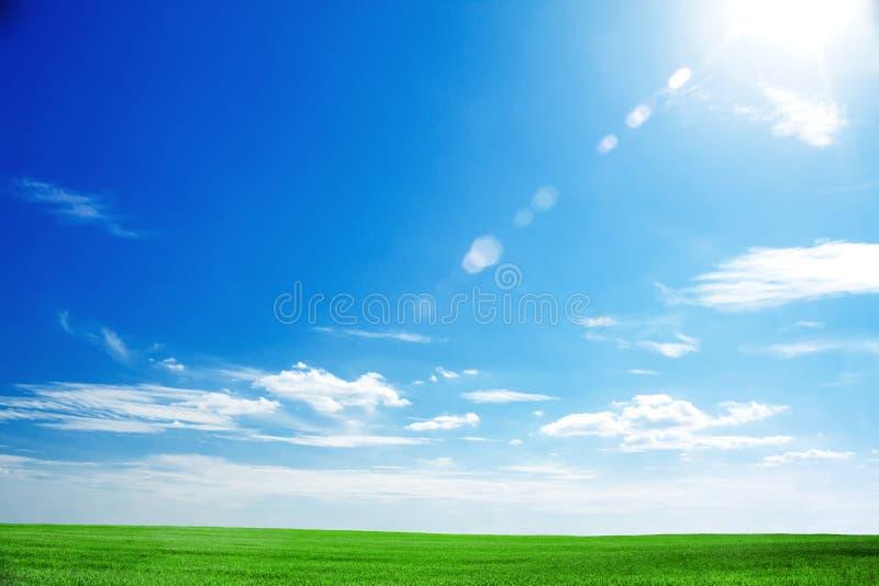 Campo di erba verde fresca e di cielo blu luminoso fotografie stock