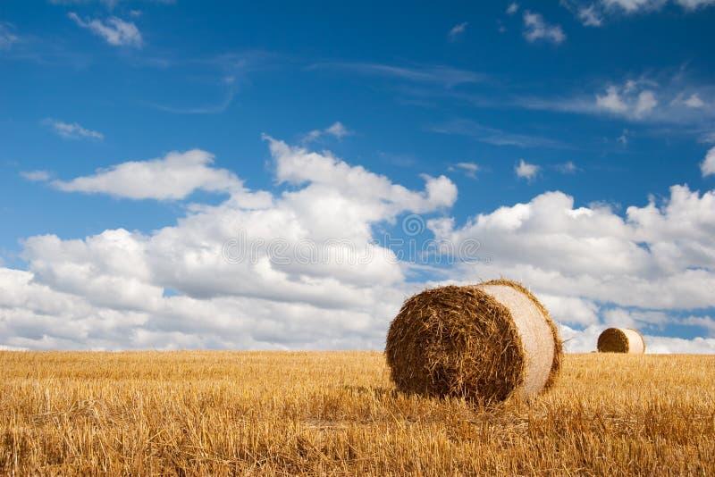 Campo di estate con la balla di paglia fotografie stock libere da diritti