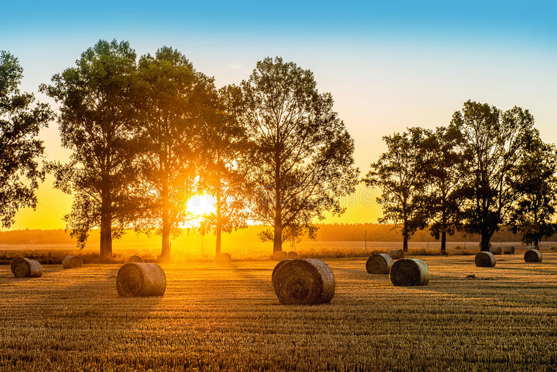 Campo di estate di alba fotografie stock libere da diritti