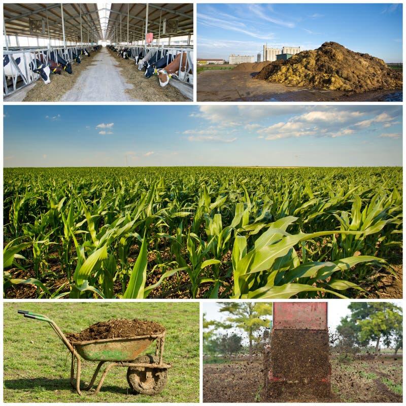 Campo di fertilizzazione immagini stock