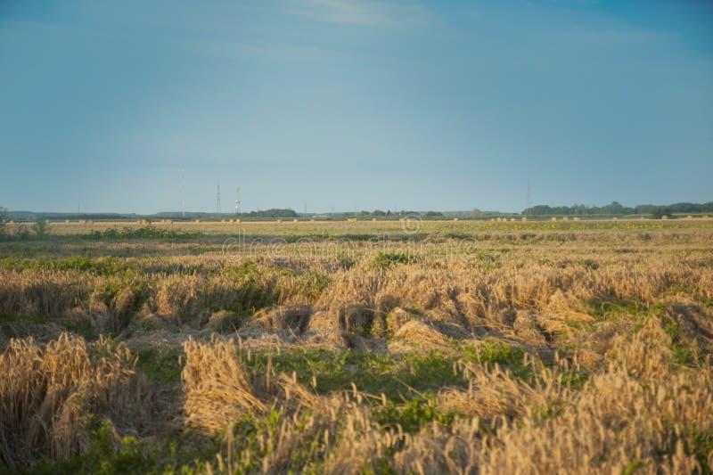 Campo di fieno e campo con grano ed erba fotografia stock