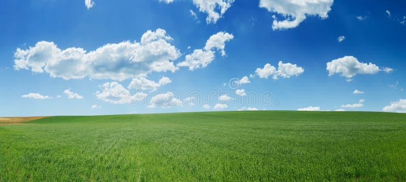 Campo di frumento e panorama verdi del cielo blu immagini stock libere da diritti