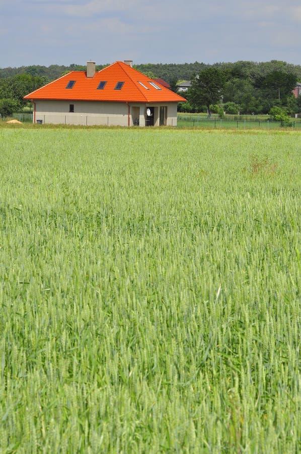 Campo di frumento verde con una casa fotografie stock libere da diritti