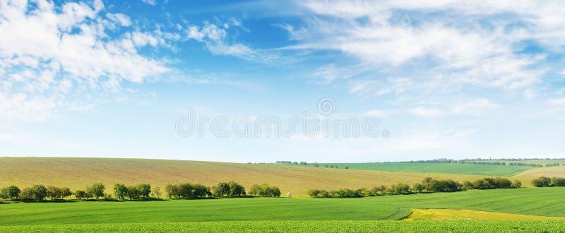Campo di grano e cielo blu verdi della molla fotografie stock