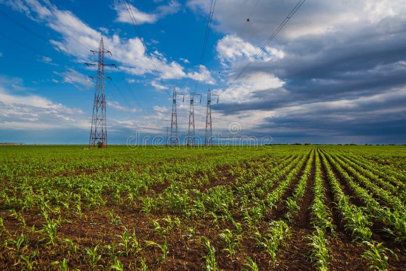 Campo di grano e linee elettriche fotografie stock libere da diritti
