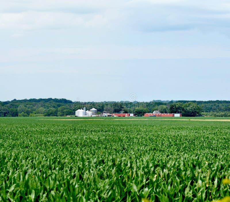 Campo di grano espansivo di Midwest immagini stock libere da diritti