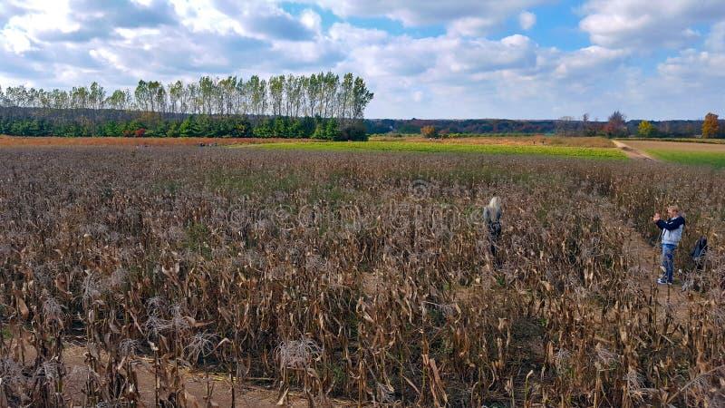 Campo di grano di Ontario fotografia stock libera da diritti