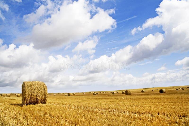 Campo di granulo - paesaggio di autunno fotografie stock libere da diritti