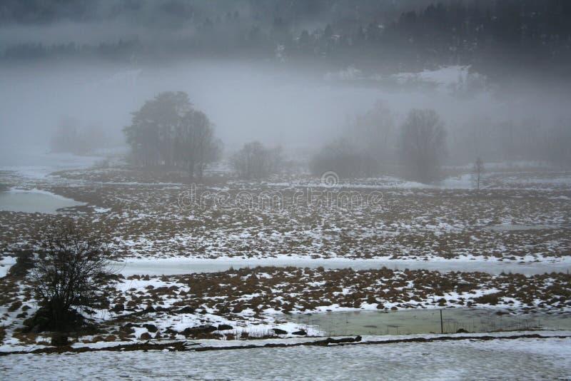 Campo di inverno in nebbia fotografia stock libera da diritti