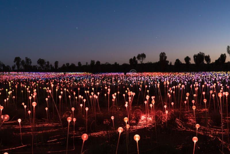 Campo di luce, Uluru, Territorio del Nord, Australia immagini stock