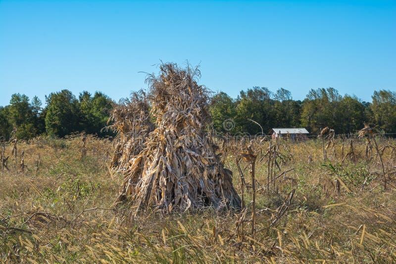 Campo di mais di Amish su chiaro Autumn Day immagini stock libere da diritti