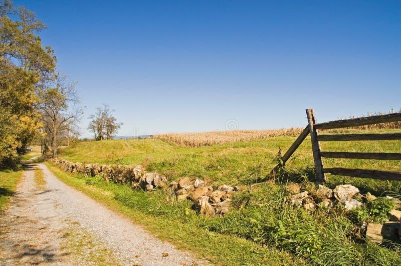 Campo di mais del paese nella caduta con cielo blu fotografia stock