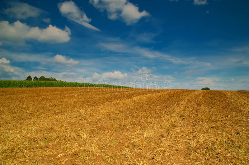 Campo di mais largo immagini stock libere da diritti