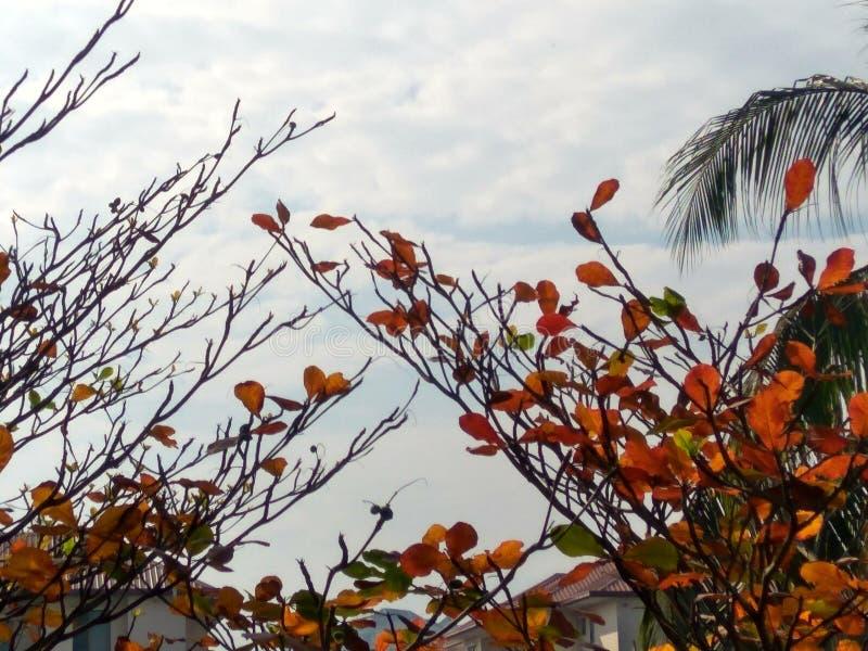 Campo di mattina della sorgente? di erba verde e del cielo nuvoloso blu fotografie stock