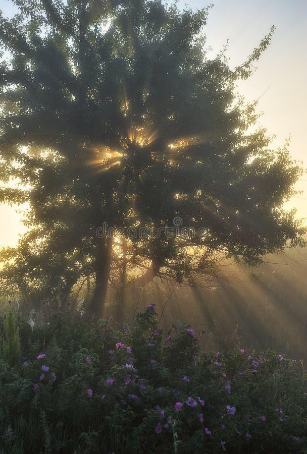 Campo di mattina della sorgente? di erba verde e del cielo nuvoloso blu Alba nella valle del fiume pittoresco fotografie stock libere da diritti