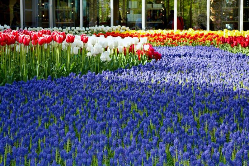 Campo di multi fiori colorati immagine stock