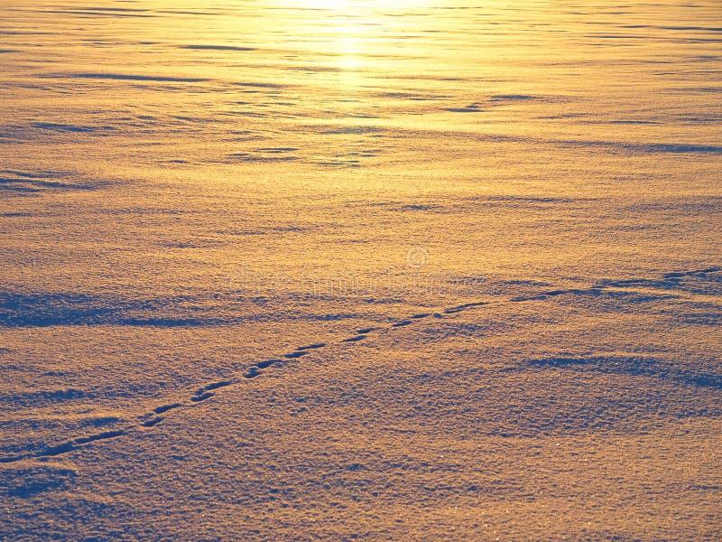 Campo di neve che brilla dal tramonto dorato fotografia stock libera da diritti