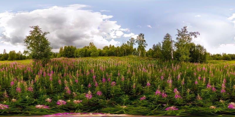 Campo di salice-tè un giorno nuvoloso Panorama sferico del vr da 360 gradi fotografia stock libera da diritti