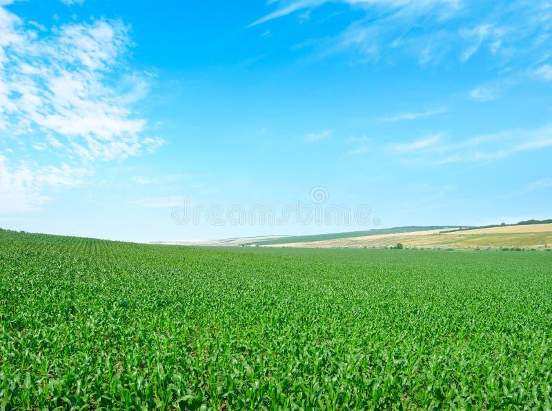Campo di sughero e cielo fotografie stock libere da diritti