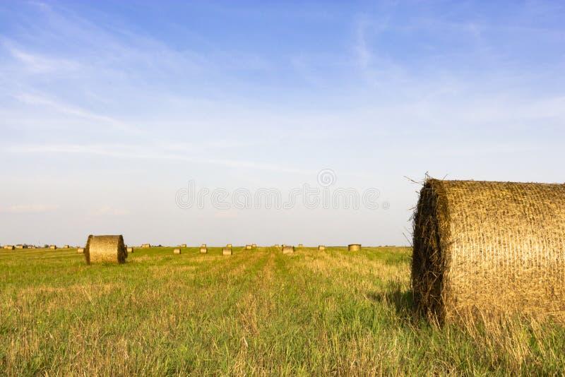 Campo do  de Ð com rolos do feno no por do sol wallpaper imagens de stock royalty free