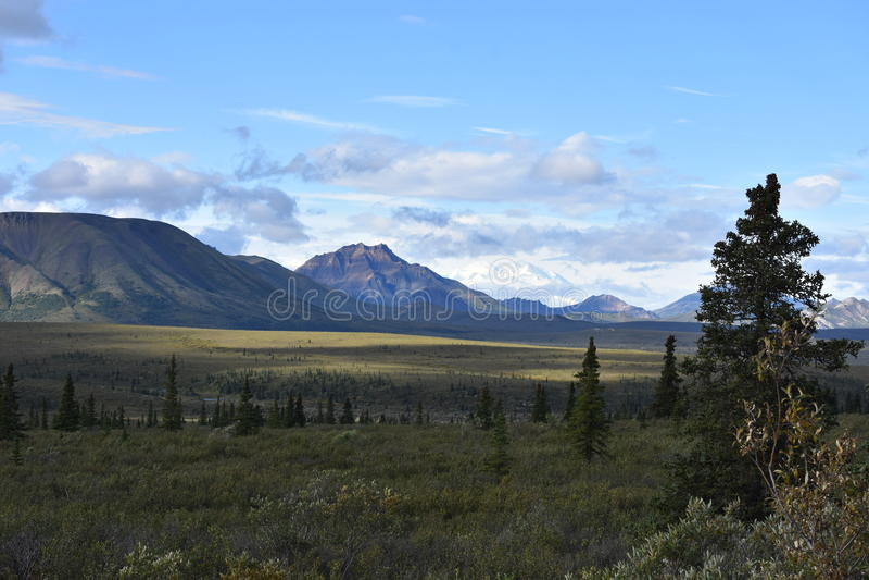 Campo do Alasca imagens de stock royalty free
