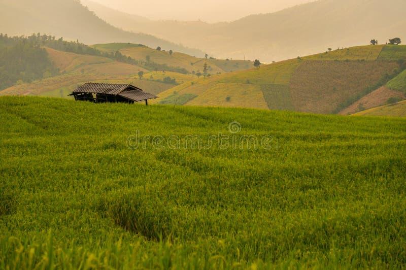 Campo do arroz com abrigo pequeno fotografia de stock