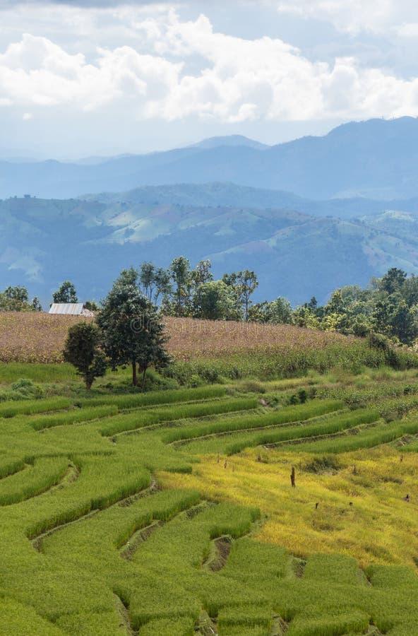 Campo do arroz da paisagem no monte imagens de stock