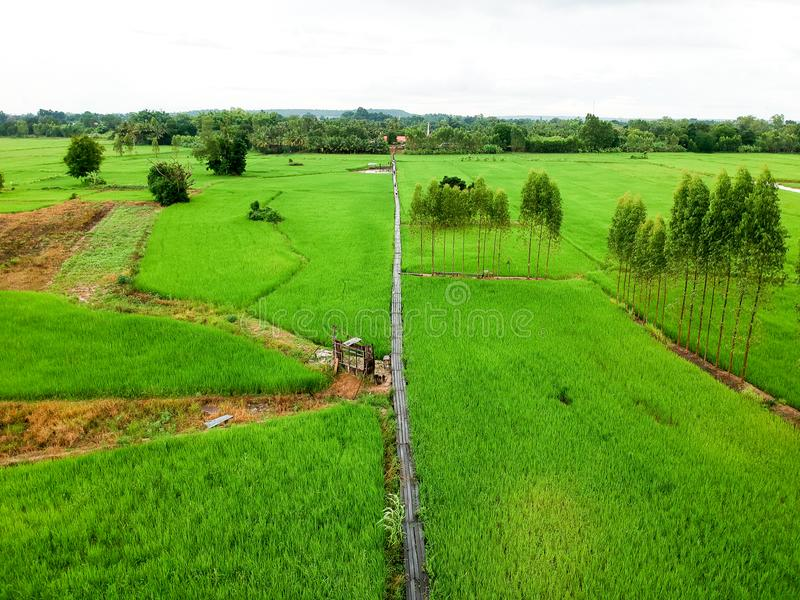 Campo do arroz da vista aérea em Tailândia fotos de stock