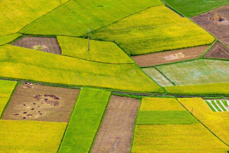 Campo do arroz de Bac Son fotografia de stock royalty free